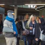 Collectif pigeons